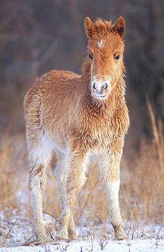 Foal | Winter Animals