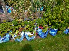 growing vegetables in containers - Google Search