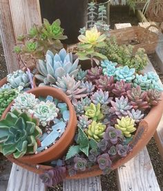 succulent bowl Growing Succulents, Small Succulents, Succulents In Containers, Succulent Landscaping, Succulent Gardening, Planting Succulents, Succulent Bowls, Succulent Terrarium, Small Garden Fairies