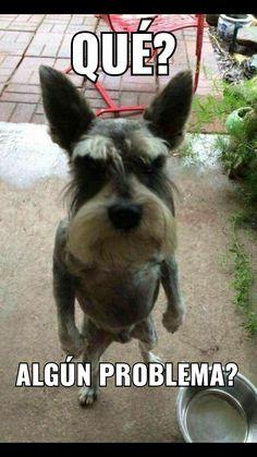 Como cuando estás a punto de regañar a tu perro