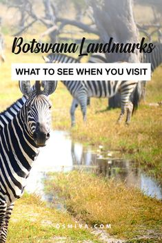 Traveling Through Botswana's Landmarks. List of places to visit when in Botswana. Africa Destinations, Top Travel Destinations, Places To Travel, Places To Visit, Delta Do Okavango, Namibia Africa, Road Trip Essentials, African Countries, African Safari