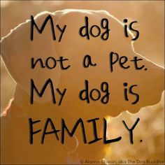 my #dog is #family.