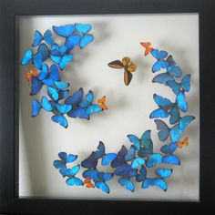 One of our most popular displays - the Morpho Swirl featuring an orange birdwing butterfly and splashes of baby orange beauties! The display measures three feet squared. Butterfly Nursery, Butterfly Frame, Morpho Butterfly, Origami Butterfly, Butterfly Project, Bug Art, Baby Orange, Butterfly Decorations, Insect Art