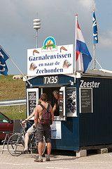 Je kan ook zeehondenspotten op de Waddenzee. Koop een kaartje bij een van de garnalenboten in Oudeschild.