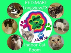 ADOPT A CAT MONTH $30 ADOPTION FEE FOR 3O DAYS OF JUNE  Adopt your new kitty through Texas Star Rescue!! All of our cats are located in the indoor cat room at the PetSmart in Longview, Texas #TSRadopt #cat #texasstarrescue #adopt #petsmart #rescue #helpsavealife #rescuedismyfavoritebreed #meow #purr #kittens