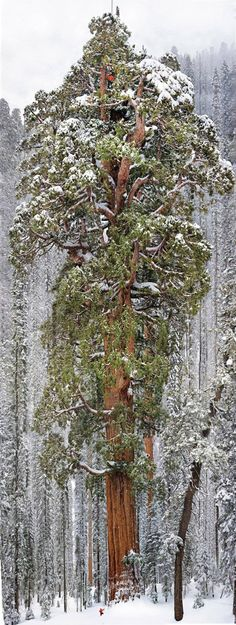 Photo du Jour: The Largest Tree in the World Captured in 126 Photos