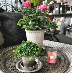 Des fleurs et des bougies! Que demander de plus! 💕🌸(📷 @holmsundsblommor ) ・・・ #morsdag #holmsundsblommor #visitumea #holmsund #obbola #umea #woodwick #majascottage #bergspotter #fleurs #fleuriste #bougie #parfum #perfume #bougieparfumee #loveflowers #flowers #decoration #homesweethome #homedecoration #homeinspiration