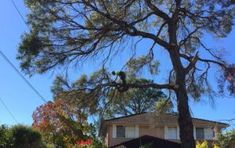 is the process of cutting back branches of trees and reducing crowns to keep them from overgrowing and damaging your home or other structures on your property or to give them a tidy and pleasant look.