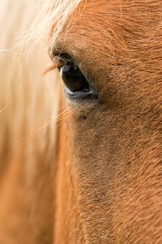 Horse portrait - Close up of a horse