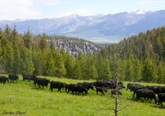Visit a working ranch - maybe in Montana