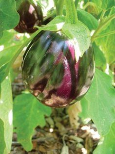 Greensgrow's Eggplant Dig Recipe