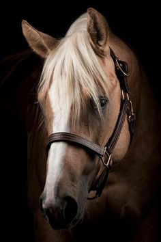 Gorgesous horse, slidingstop: Platinum Vintage 2011 Palomino AQHA Stallion 2015 Open NRHA Derby Champion, ridden by Todd Bergen © James Winegar and Silver Spurs Equine Horses And Dogs, Cute Horses, Pretty Horses, Horse Love, Wild Horses, Most Beautiful Horses, Animals Beautiful, Cute Animals, Pretty Animals