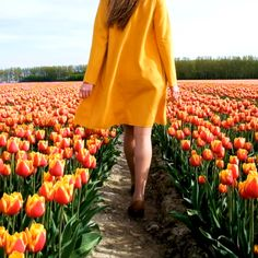 Tulip Season in the Netherlands Talk about the PERFECT destination to get the gram. Places Around The World, Oh The Places You'll Go, Tulip Season, Photography Challenge, Beautiful Places To Travel, Travel Videos, Travel Goals, Travel Tips, Travel Style