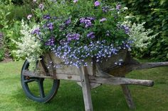 Wheelbarrow ~ shabby little garden