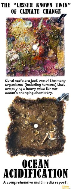 The lesser known twin of climate change: Ocean Acidification