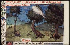 Black crow and white raven. The Crow counsels Apollo's raven  ----The Hague, KB, 74 G 27 .   Christine de Pisan, L'Epistre d'Othea Place of origin, date:  Auvergne(?); c. 1450-1475       http://manuscripts.kb.nl/show/manuscript/74+G+27