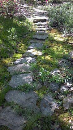 Relaxing shady garden path