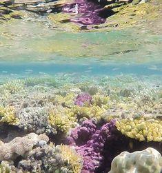 Rotes Meer Ägypten Tauchen, Schnorcheln, Faszination Unterwasserwelt, Ägypten Urlaub, Urlaub am Roten Meer, Korallenriffe, Vielfaltigkeit, Sharm El Sheikh, Naturschutzgebiete So schön wie sonst nirgendwo! #erlebniswelt #releben #genießen #schnorcheln #tauchen #rotesmeer #ägypten #urlaub #faszination #redsea #diving #travel #unterwasserwelt #fische #farben #erlebnis #vacation #sharmelsheikh Sharm El Sheikh, Red Sea Diving, Coral Reefs, Underwater World, Nature Reserve, Snorkeling, Under The Sea, Egypt, Ocean