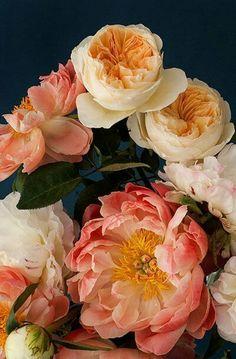 Peonies: dark botanical no 7 My Flower, Fresh Flowers, Beautiful Flowers, Peony Flower, Peach Flowers, Spring Flowers, Bloom, Arte Floral, Planting Flowers