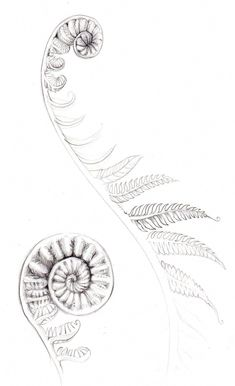 maori tattoos meaning Maori Tattoo Designs, Tattoos, Geometric Tattoo Pattern, Art Tattoo, Fern Tattoo, Tattoo Pattern, Maori Tattoo, Flower Tattoos, Tattoo Designs