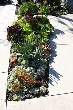 Pretentious Front Yard Rock Garden Landscaping Ideas - Page 26 of 69 Garden Inspiration, Rock Garden Landscaping, Plants, Succulent Landscaping, Succulents, Outdoor Gardens, Succulents Garden, Flowers, Xeriscape