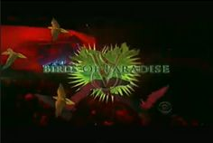 #BirdOfParadise of #VSFashionShow only #CBS @Victoria's Secret