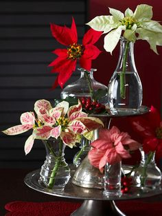 New Take on a Trademark: Poinsettias might be a Christmas classic, but they aren't limited to their potted locales. Snip a few colorful bracts and arrange them in small bud vases. Display a grouping of the vases on a tiered tray for an artful arrangement.
