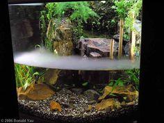 bonsai aquascape