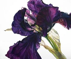 Iris series 9 SOLD Rosie Sanders