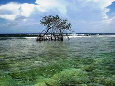 En los Juanes, un manglar cerca del arrecife, Parque Nacional Morrocoy, Falcòn, Venezuela, Mi paìs.