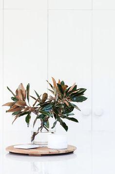 federation-house-glass-vase-plant