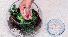 06-passo-a-passo-aprenda-a-fazer-um-terrario