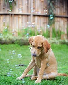 Dreaming of his own bubbles by Nathalie Stravers