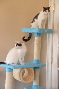 THE ARMARKAT DISTINGUISHED CAT TREE – Designer Pet Furniture & Accessories Modern Cat Furniture, Pet Furniture, Cat Tree Designs, Cat Trees, Cat Condo, Scratching Post, Condos, Animal Design, Have Fun