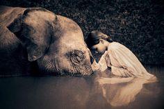 Parece que los elefantes van todos a morir al mismo sitio. Parece también que saben que morirán y desean yacer juntos, una vez muertos. Par...