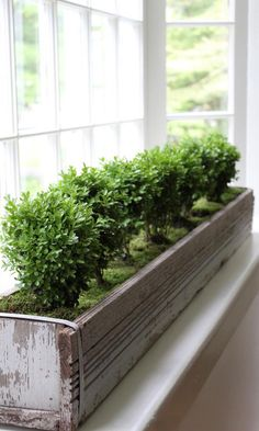 herb kitchen indoor #garden kit wooden windowsill #planter box