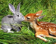 Real-life Bambi and Thumper  When Svetlana Harper spotted a shivering fawn on the roadside next to a dead doe, she brought the young deer home, nursed it back to health and named it Bambi. The fawn was just a year old, and just like in the 1942 Disney classic, this little Bambi had lost her mother. When the young deer's health improved, Harper began introducing her to her other animals, and Bambi took an immediate liking to Ben, Harper's rabbit. The two have become inseparable.