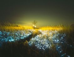 Korean photographer Lee Eunyeol creates beautiful nighttime scenes by installing lights in various landscapes that appear as if the night sky was flipped upside down with glowing stars and planets nested inside tall grass or between deep earthen cracks. Eunyeol will be showing this series of photos at the Gana Art Space in Seoul starting this week.