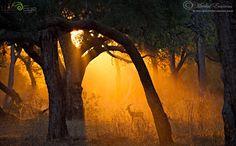 Photo Forest Light by Morkel Erasmus on 500px