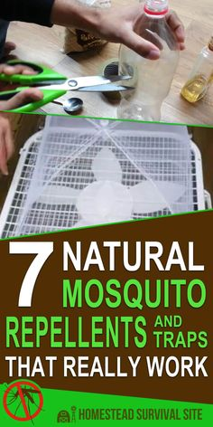 Why should you make the switch from chemical to all-natural when it comes to mosquito traps and repellents? Many reasons Mosquito Yard Spray, Diy Mosquito Repellent, Natural Mosquito Repellant, Insect Repellent, Diy Mosquito Trap, Misquito Repellant, Misquito Trap, Mosquito Control, Weed Control