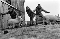 Korean pop group the Kim Sisters, on their inaugural trip to the U.S. in 1960, became a hit on the nightclub circuit. Here, they visit a farm in Illinois. See more: http://ti.me/1srrBLU  (Robert W. Kelley—The LIFE Picture Collection/Getty Images)