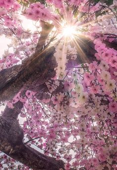 Spring flowers and Spring light shining through