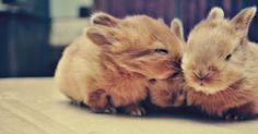 Bunny Kisses. Goodnight pinterest.