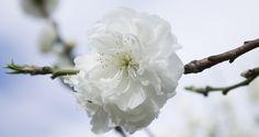 è primavera