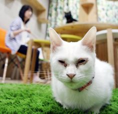 A cat lover's paradise has opened in Osaka's Shinsaibashi commercial district, housing cat-themed shops and cafes as well as a space for visitors to intera
