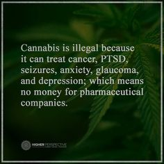 Cannabis is illegal because it can treat cancer, PTSD, seizures, anxiety, glaucoma, and depression; which means no money for pharmaceutical companies.