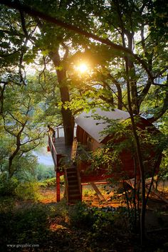 Now, that's the right setting for a tree house!