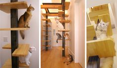 An amazing house designed with plenty for cats to do.  I would love to use a few of these ideas in my own home.