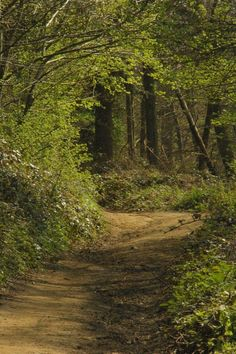Chantry Wood, Guildford - a place where pilgrims passed on their way to Canterbury.
