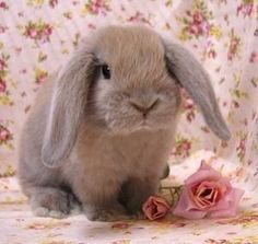 i have thing for bunnies...